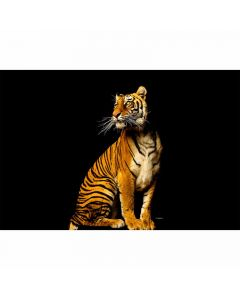 DD114664 XXL Wallpaper 5 Fototapete, Tiger