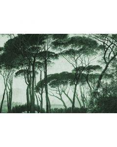 DD117880 Atelier 47 Fototapete, Treetops 2