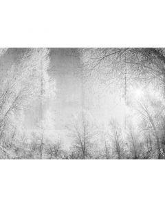 DD118020 Atelier 47 Fototapete, Forest Glade 1