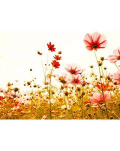 DD118600 Designwalls Fototapete, Flower Meadow 2
