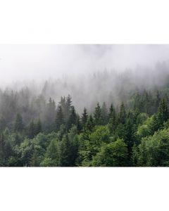 DD118602 Designwalls Fototapete, Foggy Fir Trees