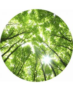 DD119185 Designwalls 2.0  Fototapete, Sunny Forest