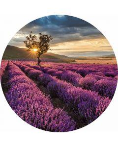 DD119192 Designwalls 2.0  Fototapete, Lavender in the Provence