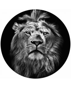 DD119196 Designwalls 2.0  Fototapete, Lion