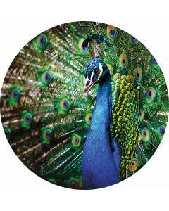 DD119198 Designwalls 2.0  Fototapete, Beautiful Peacock