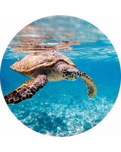 DD119208 Designwalls 2.0  Fototapete, Turtle on Travel