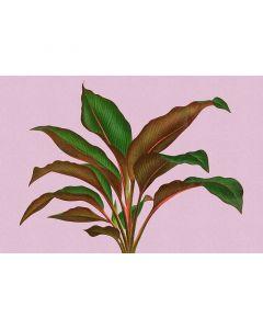DD121956 Walls by Patel 3 leaf garden 3