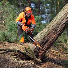 Nachhaltige Forstwirtschaft Tapetenherstellung