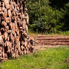 Holzstapel nachhaltiges Holz